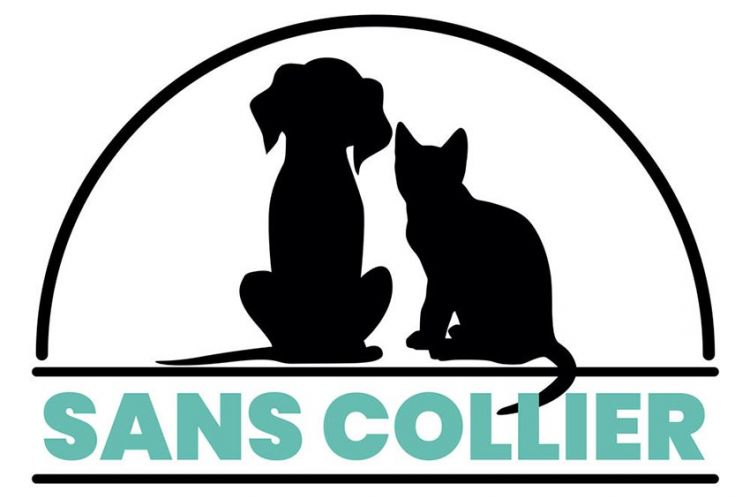 """""""Sans collier"""" : immersion au refuge pour animaux de Montpellier avec Jean-Luc Reichmann sur TF1"""