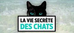 """""""La vie secrète des chats"""" racontée par Valérie Damidot sur TF1 à partir du 20 août"""