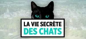 """""""La vie secrète des chats"""" racontée par Valérie Damidot cet après-midi sur TF1 (vidéo)"""
