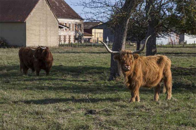 """""""L'amour est dans le pré"""" : revoir les portraits des 6 derniers agriculteurs de la saison 14 (vidéo)"""