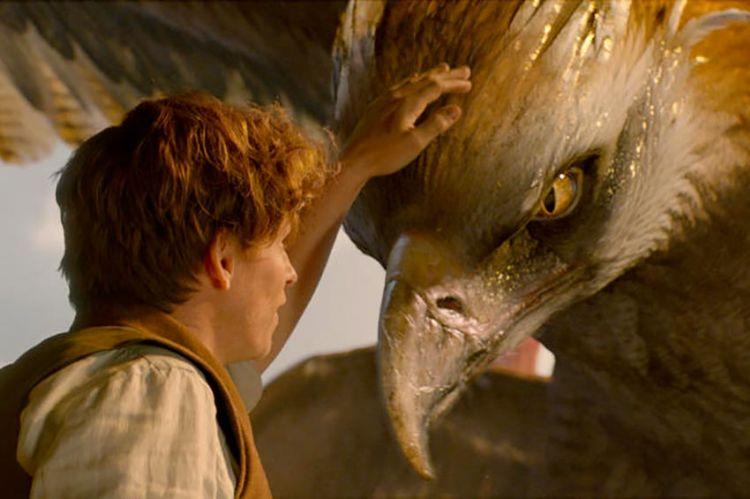 """""""Les animaux fantastiques"""" de J.K. Rowling à découvrir sur TF1 dimanche 18 octobre"""