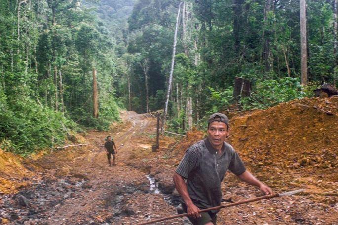 « Bornéo, la forêt disparue », enquête sur le commerce du bois et la déforestation, mardi 3 août sur ARTE