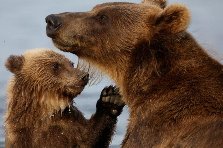 « Fort comme un ours », samedi 10 avril sur ARTE (vidéo)