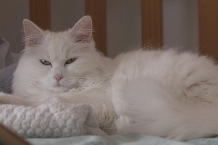 « Ces animaux qui nous soignent », mardi 22 juin sur France 5