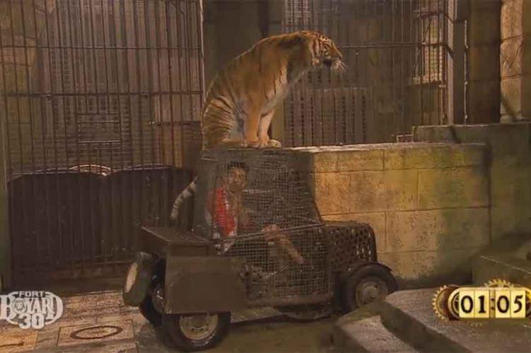 """Extrait """"Fort Boyard"""" : Bigflo au Safari """"Je ne peux pas bouger, j'ai un tigre sur le véhicule"""" (vidéo)"""